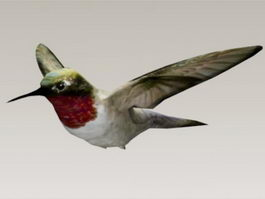 Hummingbird 3d model