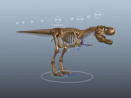 Tyrannosaurus Rex Skeleton Rig 3d model