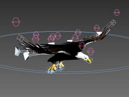 Eagle Flying Animation 3d model