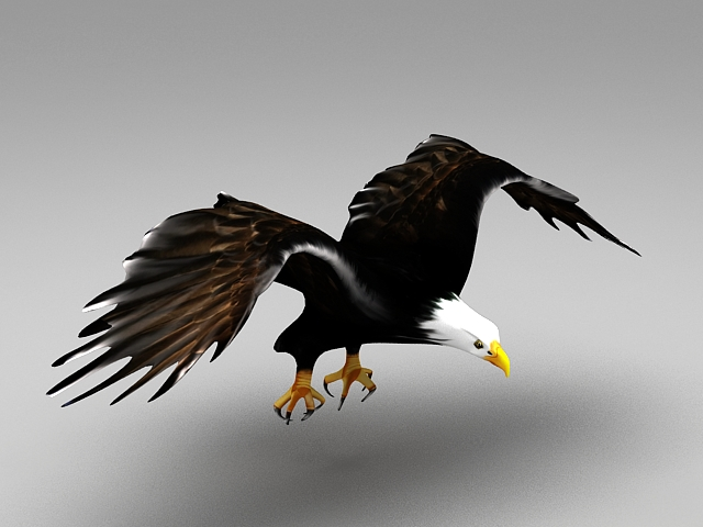 Eagle Flying Animation 3d Model 3ds Max Files Free