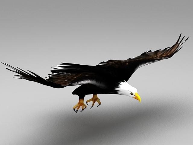 Eagle Flying Animation 3d model