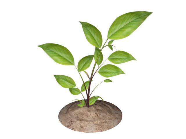 Little Tree 3d model