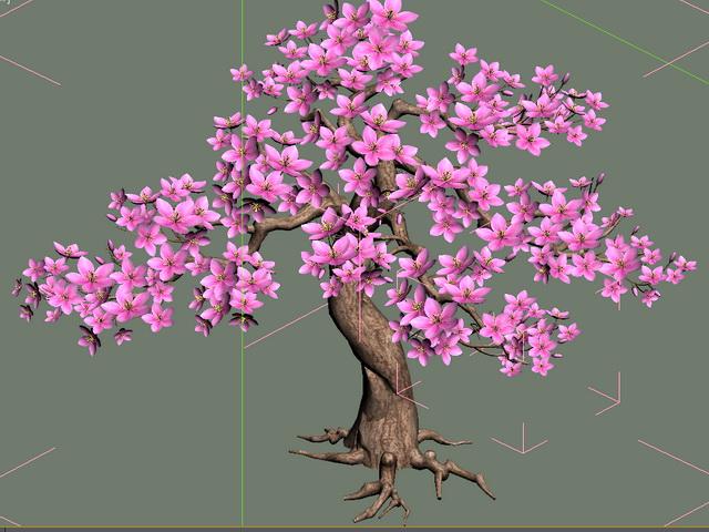 Flowering Peach Tree 3d model