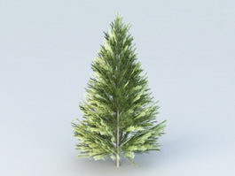 Evergreen Fir Tree 3d model