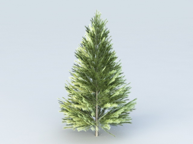 Evergreen Fir Tree 3d model