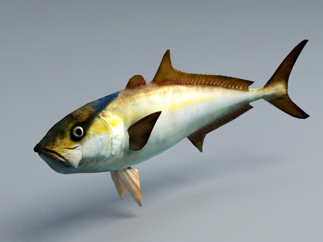 Amberjack Fish Animation 3d model rendered image