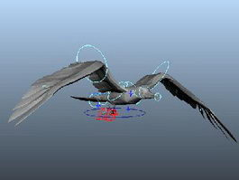 Gull Flying Animation 3d model