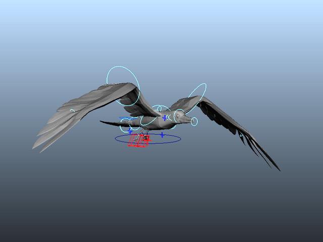 Gull Flying Animation 3d model rendered image