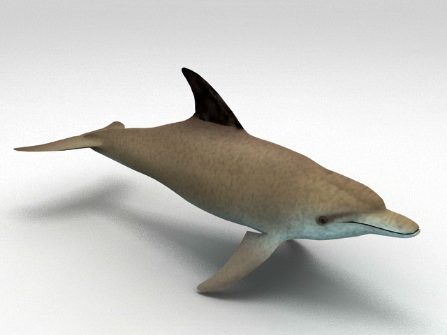 South Asian River Dolphin 3d model rendered image