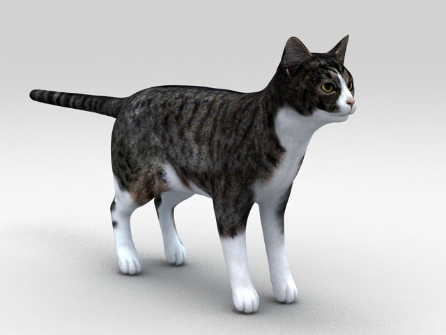 Classic Tabby Cat 3d model rendered image