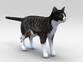 Classic Tabby Cat 3d model
