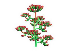 Red Sedum Pachyphyllum 3d model