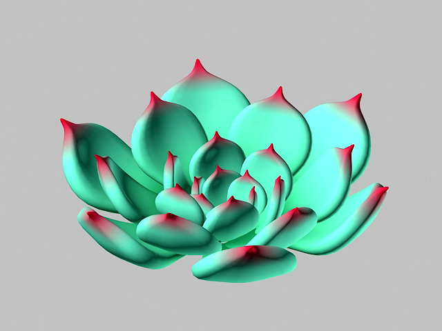 Echeveria chihuahuaensis 3d model rendered image