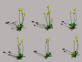 Wild Buttercup Flower 3d model