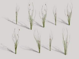 Cattails Plant 3d model