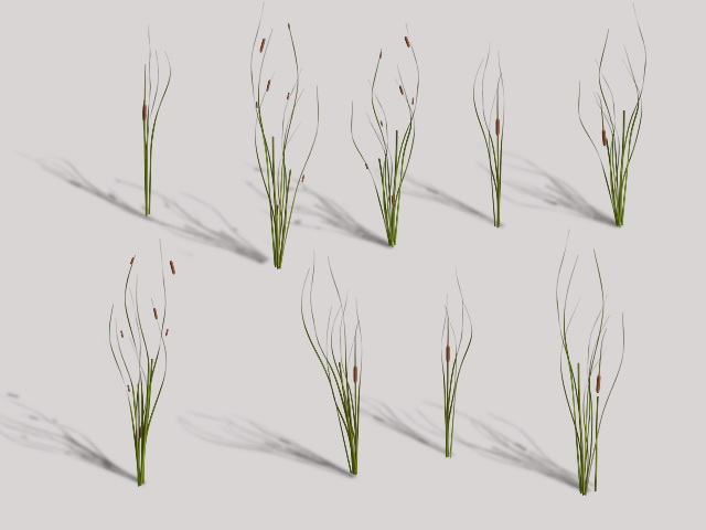 Cattails Plant 3d model rendered image