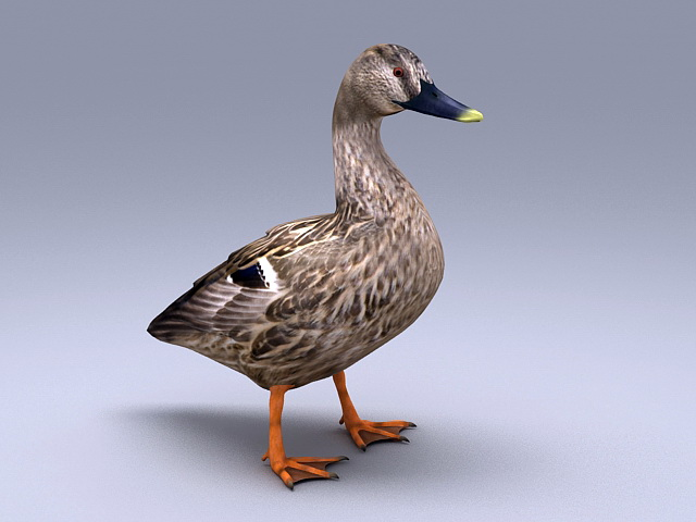 Domestic Duck 3d model rendered image