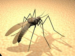 Giant Mosquito 3d model