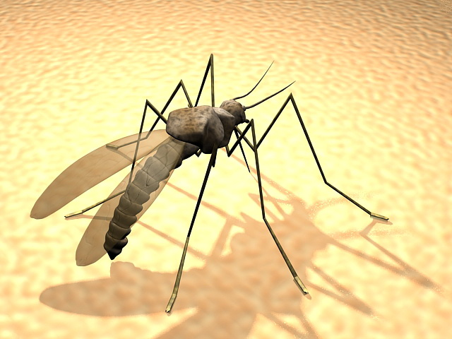Giant Mosquito 3d model rendered image