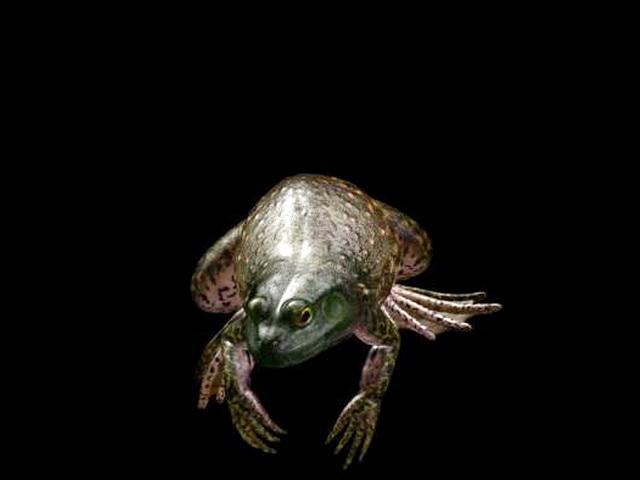 Toad Frog 3d model rendered image