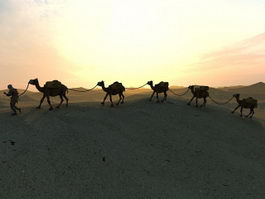 Camel Caravan In Desert Sunset 3d model