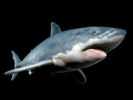 Scary Shark 3d model