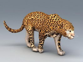African Leopard 3d model