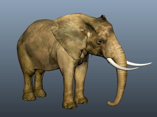Asian Elephant 3d model rendered image