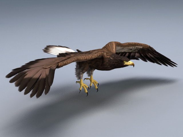 Animated Bald Eagle Rig 3d Model 3ds Max Autodesk Fbx