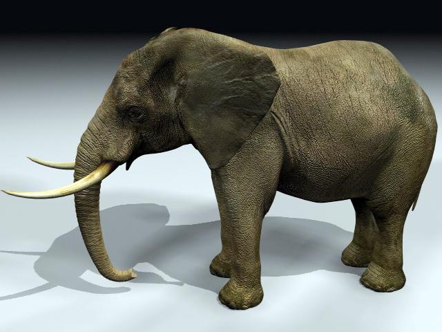 Massive Elephant 3d model rendered image