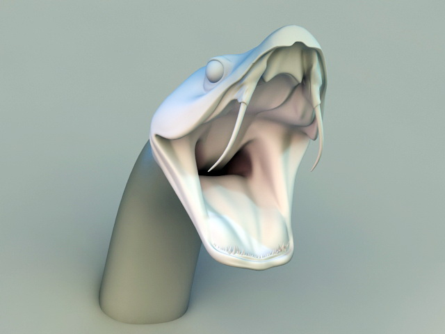 Boa Snake Head 3d model rendered image