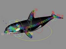 Grampus Whale Rig 3d model