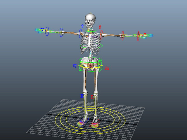 Human Skeleton Rig 3d Model Maya Files Free Download
