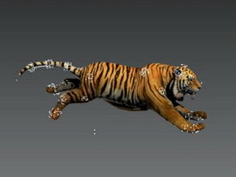 Animated Tiger Rig 3d model