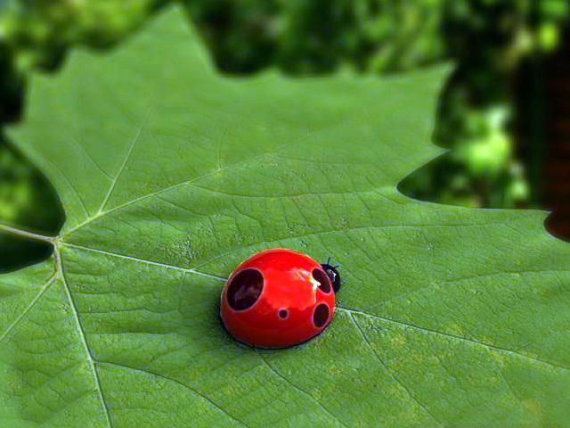 Ladybugs Beetle 3d model rendered image