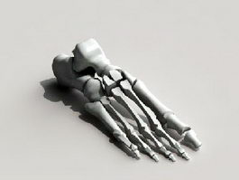 Foot Skeleton Bone 3d model