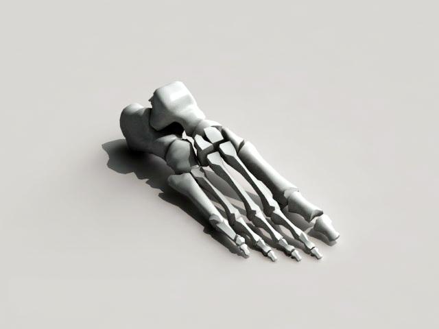 Foot Skeleton Bone 3d Model 3ds Max Autodesk Fbx Object