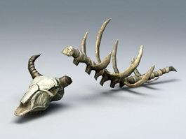 Animal Bones 3d model