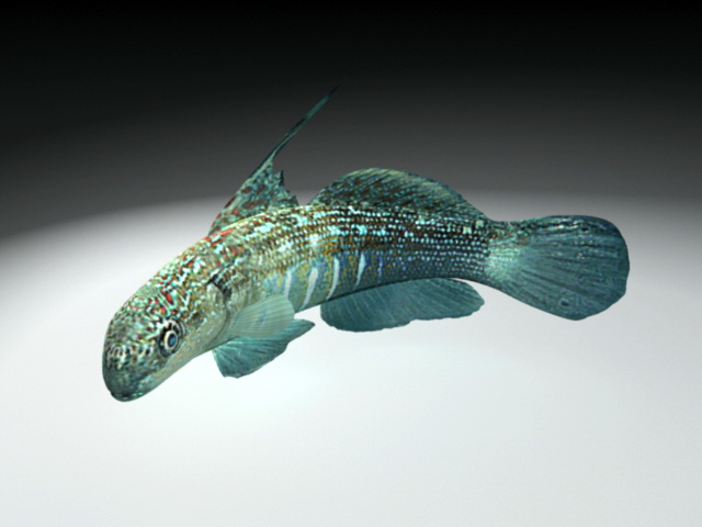 Bullet Goby Fish 3d model rendered image