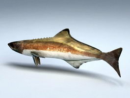 Animated Cobia Fish Rig 3d model