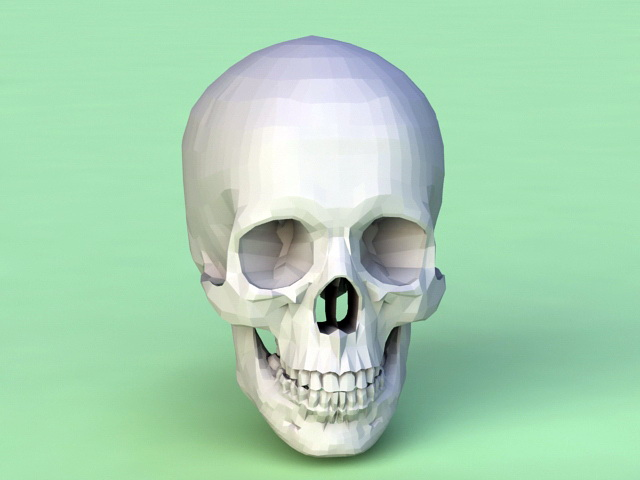 Human Skull 3d model Object files free download - modeling 45351 on