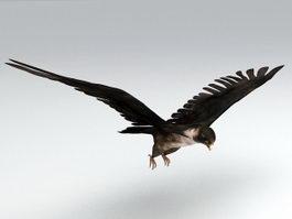 Brown Hawk 3d model