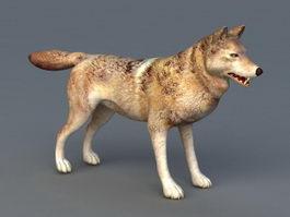 Arabian Wolf 3d model