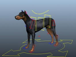 Doberman Dog Rig 3d model