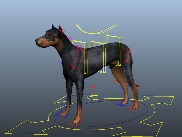 Doberman Dog Rig 3d Model Maya Files Free Download