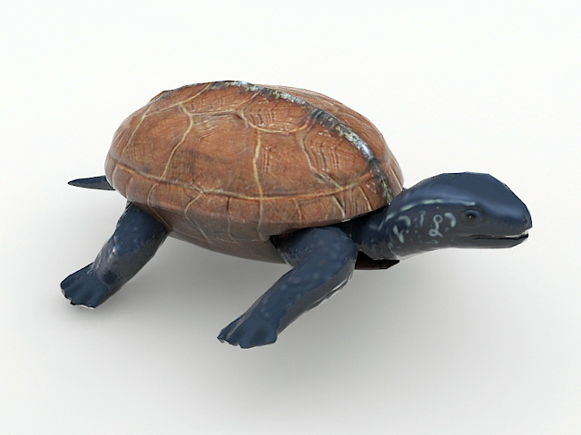 Animated Tortoise 3d model rendered image