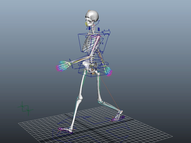 Animated Female Skeleton Rig 3d model - CadNav