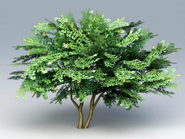 Hibiscus Tree 3d model rendered image