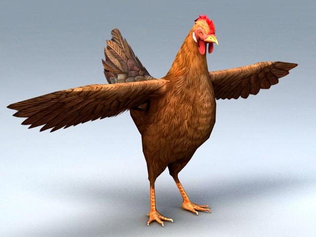 Hen Female Chicken 3d model rendered image