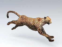 African Leopard Animated Rigged 3d model